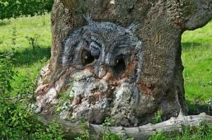 Owl pareidolia